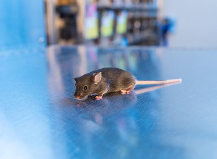 mouse on counter