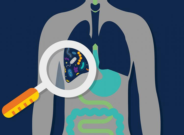 Lung Bacteria and Immunity