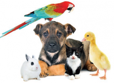 A group of cute animals